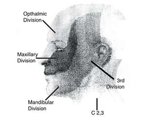 Dermatone Chart of the Head